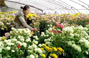 鲜花市场消费升级