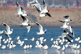 全国首个鸟类湿地慢直播平台上线