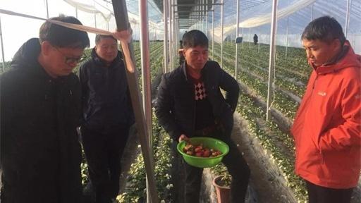 助力第一书记 农村广播再次走进刁家乡助推草莓产业扶贫