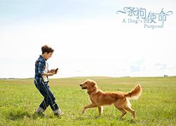 观影《一条狗的使命》 听友齐聚这里 只为遇见你