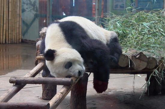 郑州市动物园门票优惠
