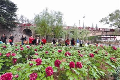 清明小长假期间,隋唐城遗址植物园内游人如织 记者 鲁博 实习生 王