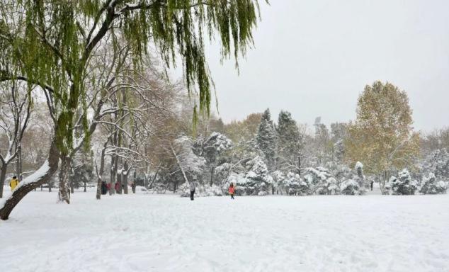 第二场雪来了 你准备好了吗?