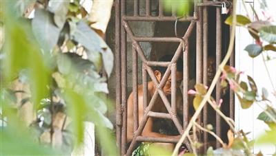 美联社记者揭东南亚渔业奴隶:关铁笼 被虐打