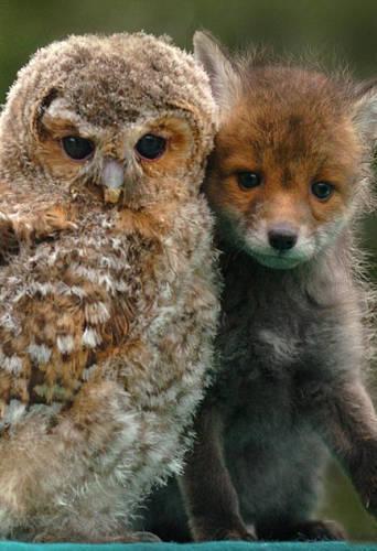 动物界罕见跨物种友谊