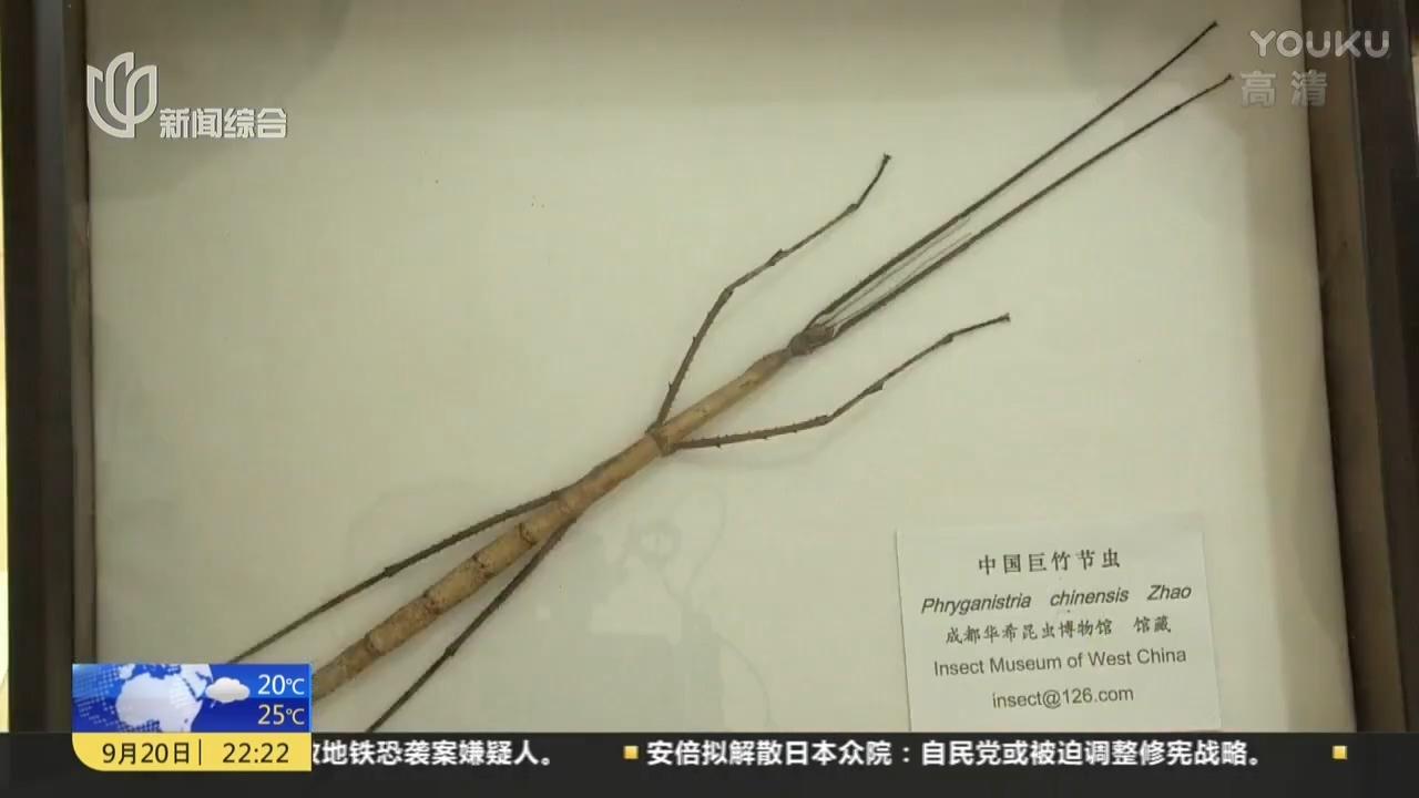 中国发现世界最长昆虫